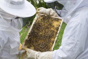 Honig Ernte, Imker